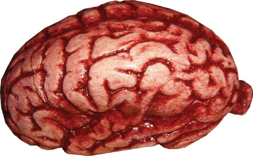 Brain Latex