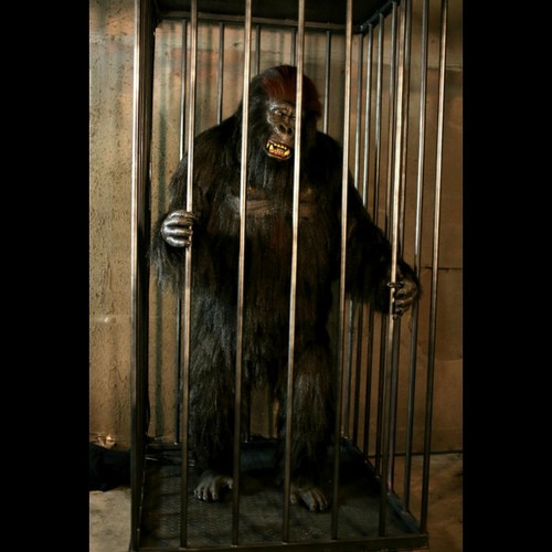 Gorilla In A Cage Animation