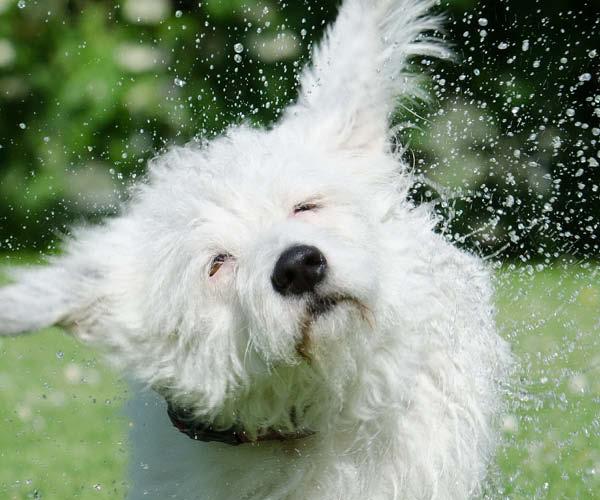 Plespleje til hund