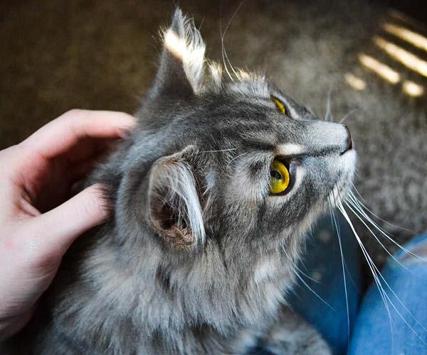 Dagligpleje til kat