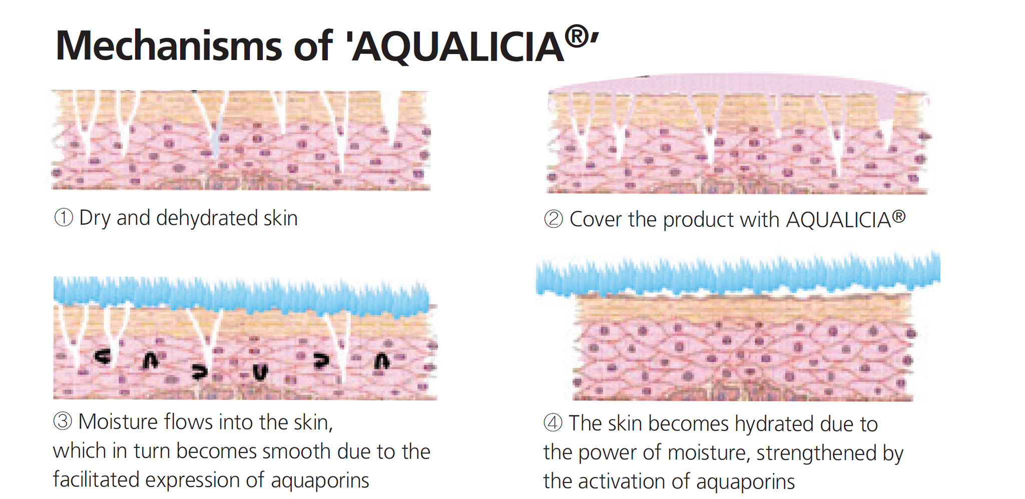 Korean skincare Aqualicia technology in Lagom cosmetics