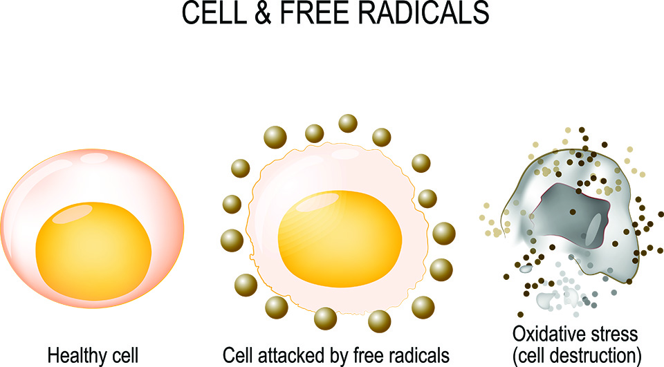 Cell & Free Radicals in Skincare