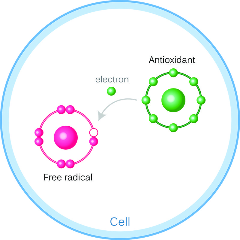 Antioxidant filling missing electron in free radical