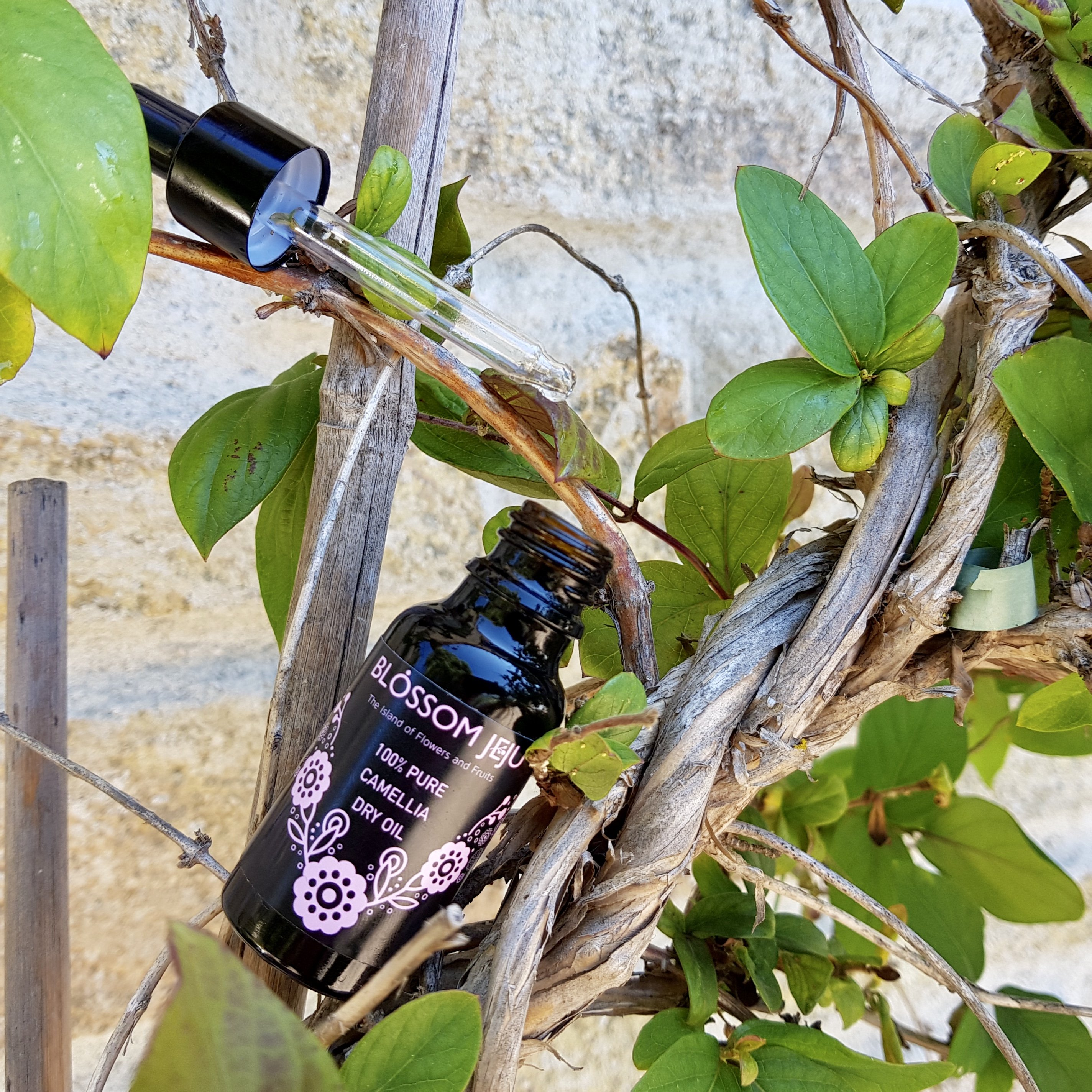 Korean skincare Blossom Jeju 100% Camellia Seed Dry Oil