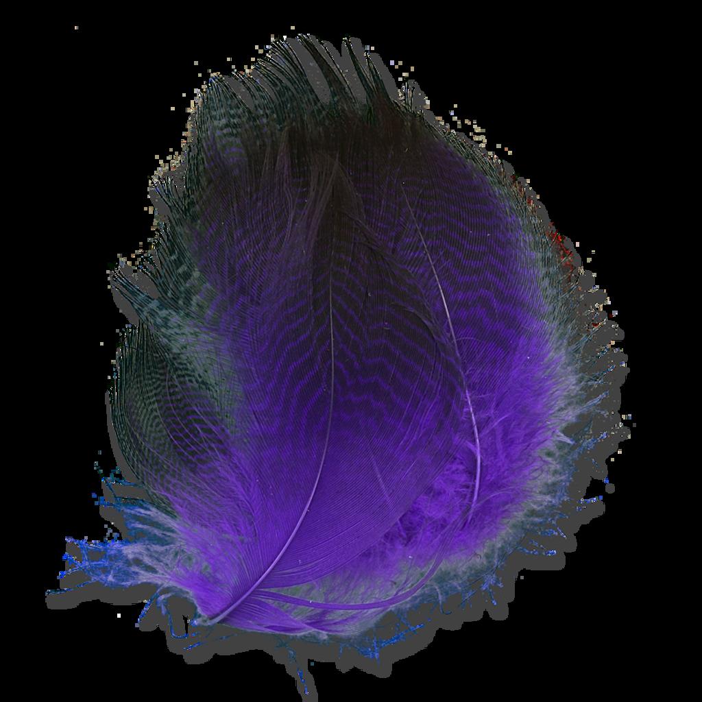 Dyed Gadwall - Purple