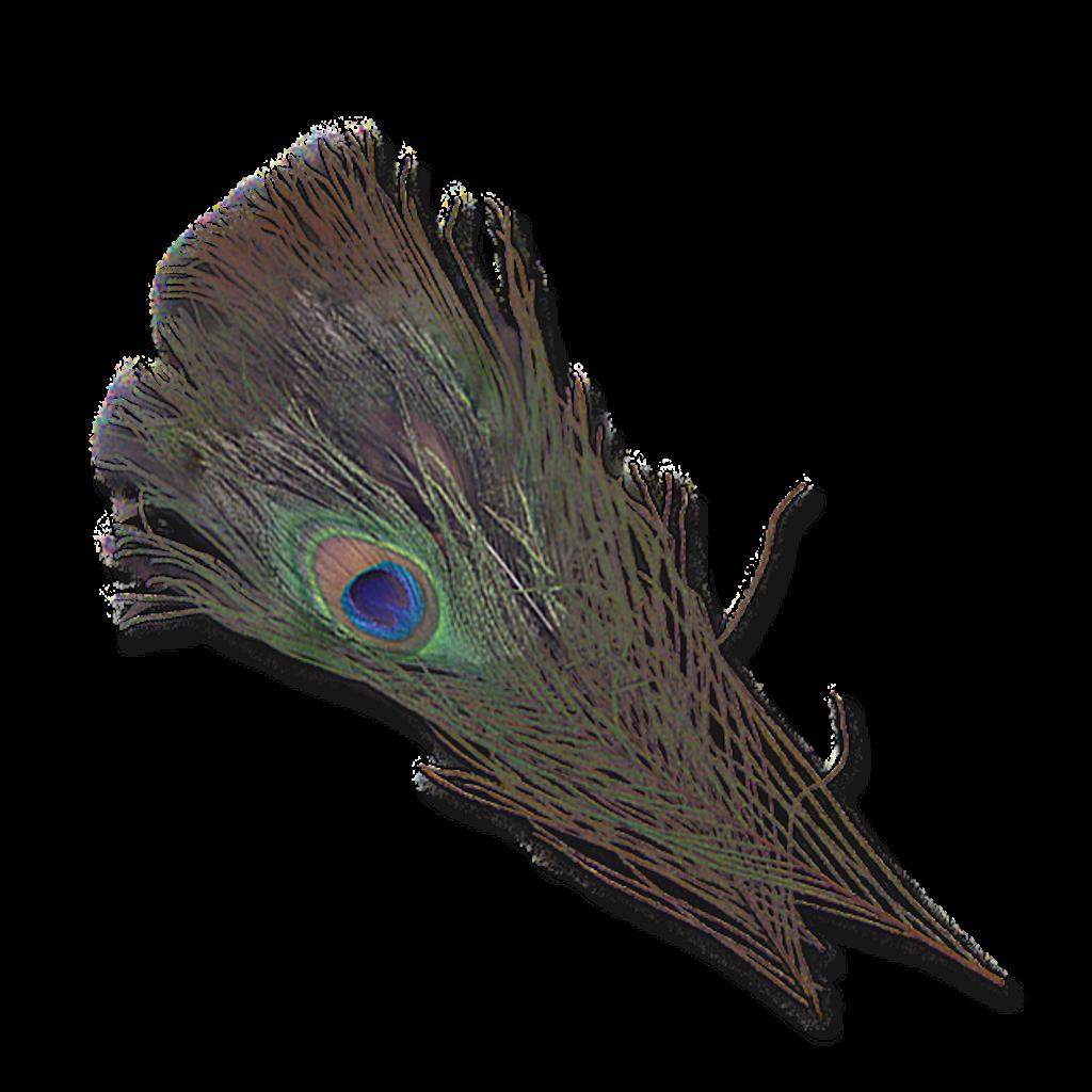 Natural Peacock Eyes