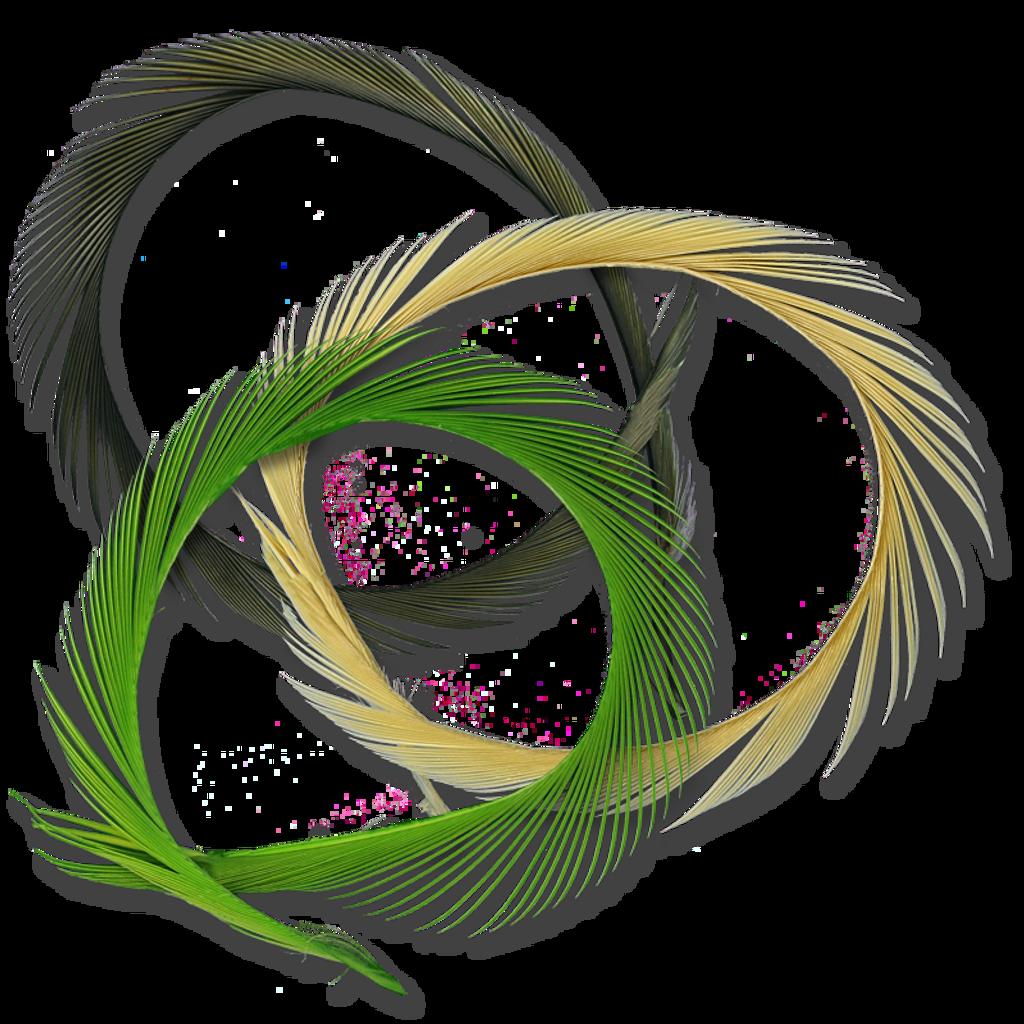 Stripped Goose Quills (Biots)