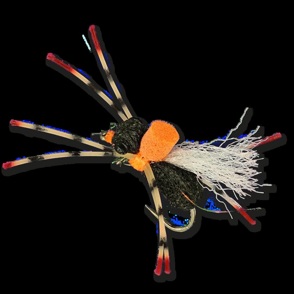 Regal Beetle - Black
