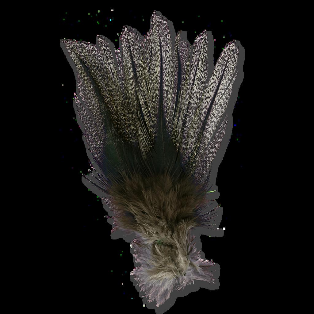 Coq De Leon - Dark Speckled