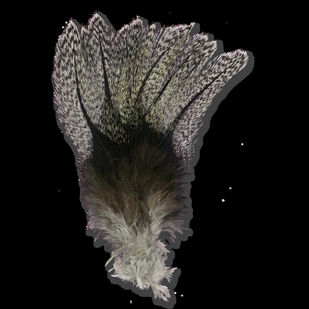 Coq De Leon - Barred Speckled