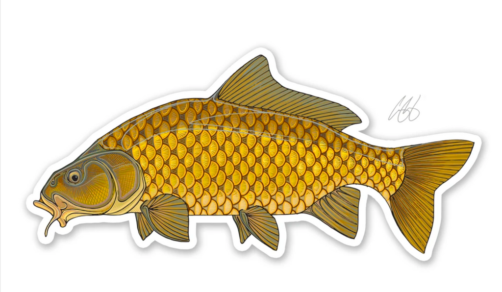 Casey Underwood Fish Decal - Common Carp
