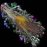 Spawning Mantis - Tan/Orange #2