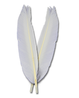Duck Quills - White