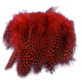 Select Guinea Body Feathers - Red