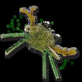 Contraband Crab - Olive