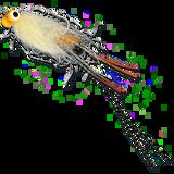ESB Yellow Eye Spawning Shrimp - White