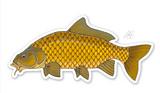 Casey Underwood Fish Decal - Common Carp