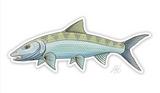 Casey Underwood Fish Decal - Bonefish