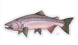 "Casey Underwood Fish Decal - Chinook ""King"" Salmon"