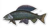 Casey Underwood Fish Decal - Grayling