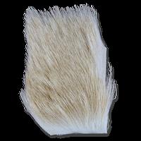 Yearling Elk - Bleached