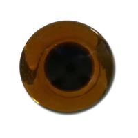 The Fly Shop's Glass Taxi Eyes - Amber