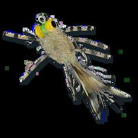 ESB Yellow Eye Raghead Crab