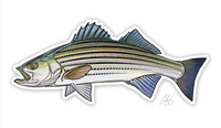 Casey Underwood Fish Decal - Striped Bass