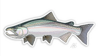 "Casey Underwood Fish Decal - Coho ""Silver"" Salmon"