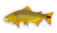 Casey Underwood Fish Decal - Golden Dorado