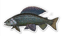 Casey Underwood Fish Decal - Grayling