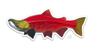 Casey Underwood Fish Decal - Sockeye