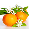 The perfect combination of refreshingly sweet organic tangerine and the lush floral blossoms of neroli and linden blossom. A seasonal, rich, non-greasy body cream, handcrafted with love and organic ingredients.