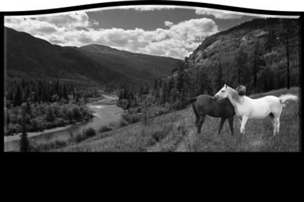 LASER ETCH HORSE SCENE