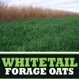 Whitetail Forage Oats