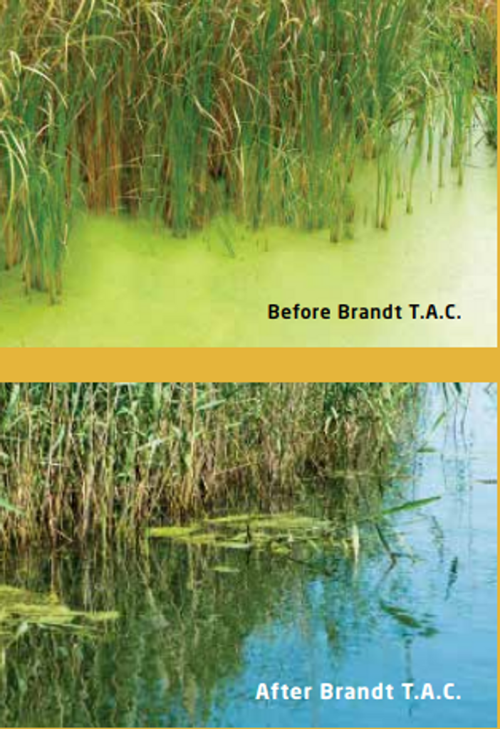Before and after photos of Total Algae Control application