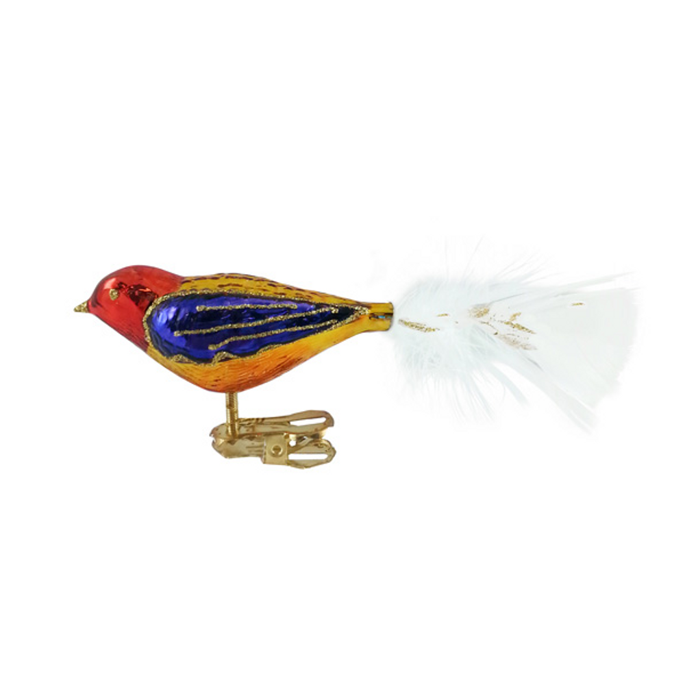 Yellow, Red and Purple Bird with White Tail