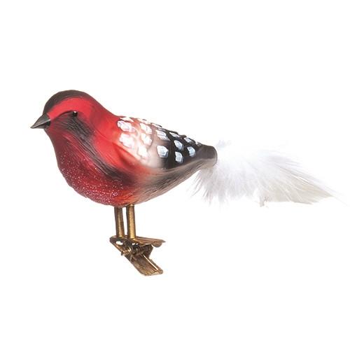 Red, Black and White Bird