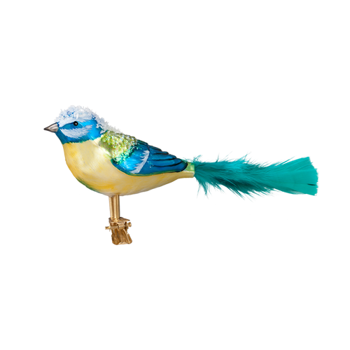 Snowy Teal Tail Bird