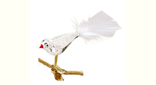 Silver Bird with White Tail