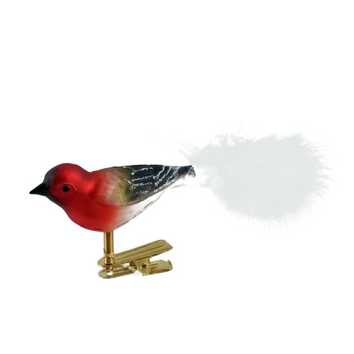Red and Black Bird with White Tail
