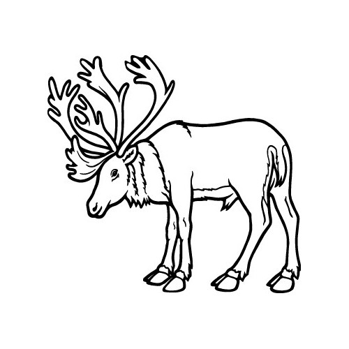 Moose  Vinyl Decal High glossy, premium 3 mill vinyl, with a life span of 5 - 7 years!