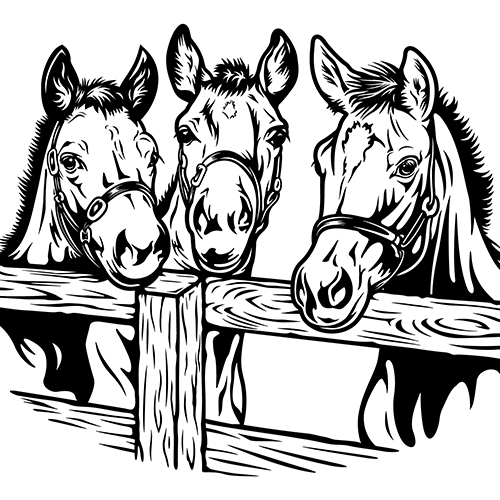 3 Horse s Vinyl Decal High glossy, premium 3 mill vinyl, with a life span of 5 - 7 years!
