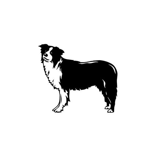 Border Collie Vinyl Decal High glossy, premium 3 mill vinyl, with a life span of 5 - 7 years!