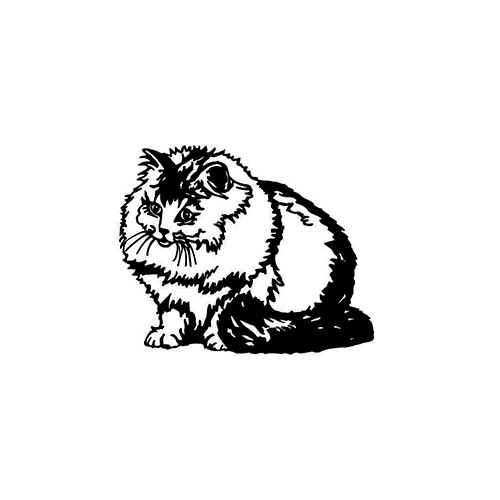 Cat ver6     Vinyl Decal High glossy, premium 3 mill vinyl, with a life span of 5 - 7 years!