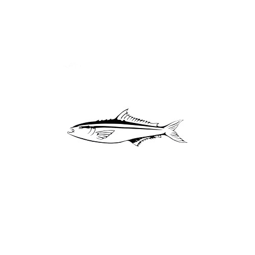 Cobia Decal High glossy, premium 3 mill vinyl, with a life span of 5 - 7 years!
