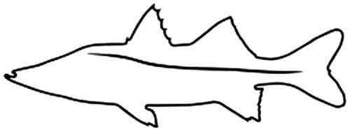 Snook Outline