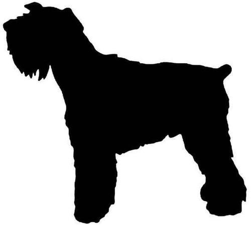 Mini Schnauzer Dog