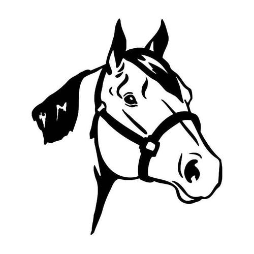 Quer Horse Head 3 Vinyl Sticker