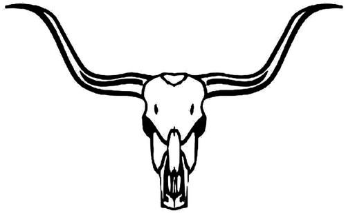 Texas Longhorn Cow Skull